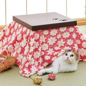 Cat Kotatsu Cardboard House