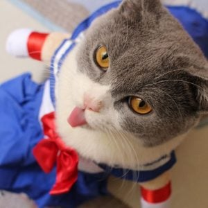 Sailor Moon Cat Costume