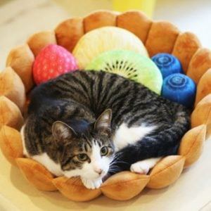 Fruit Tart Pet Bed